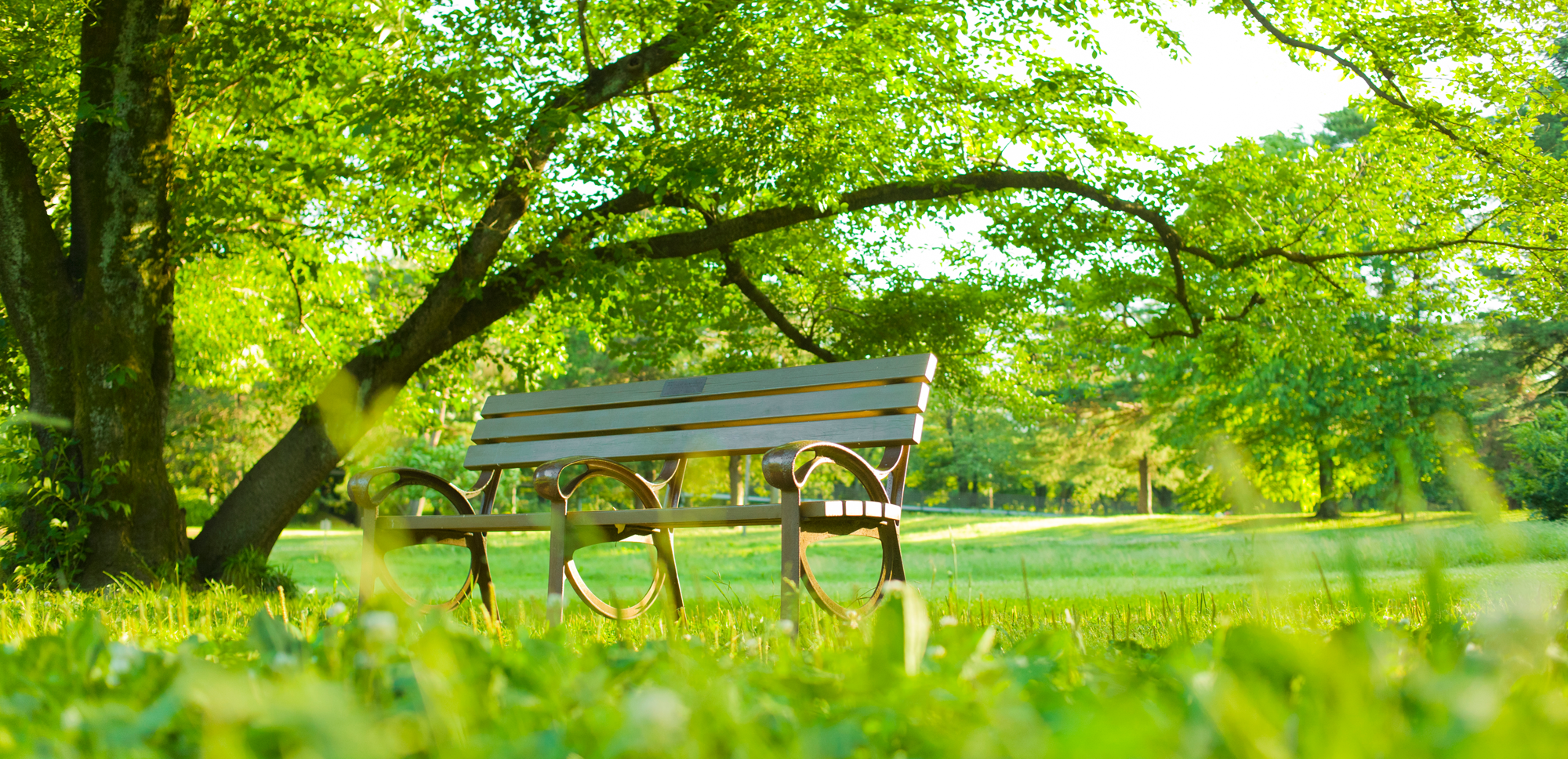 Bench surrounded by bright green grass and trees